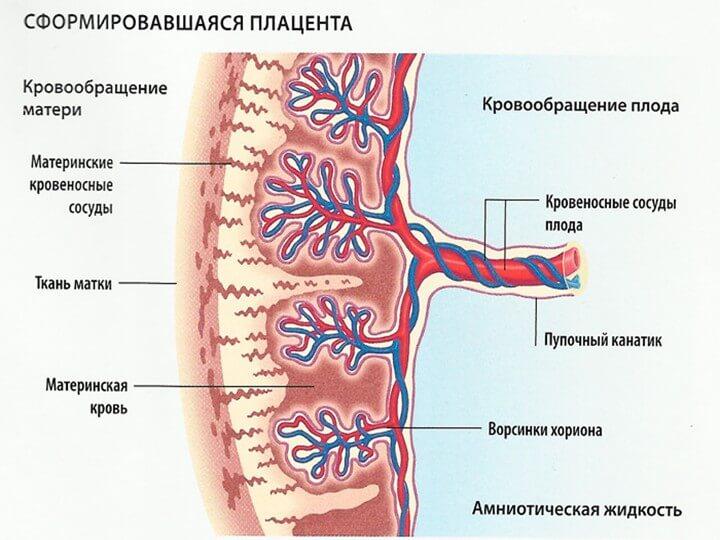степень старения плаценты