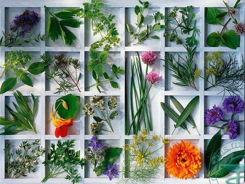травы для лечения мастопатии в домашних условиях