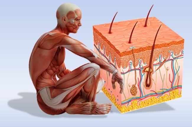 кислород и кожа человека