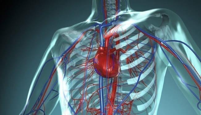кислород в сердечно-сосудистой системе